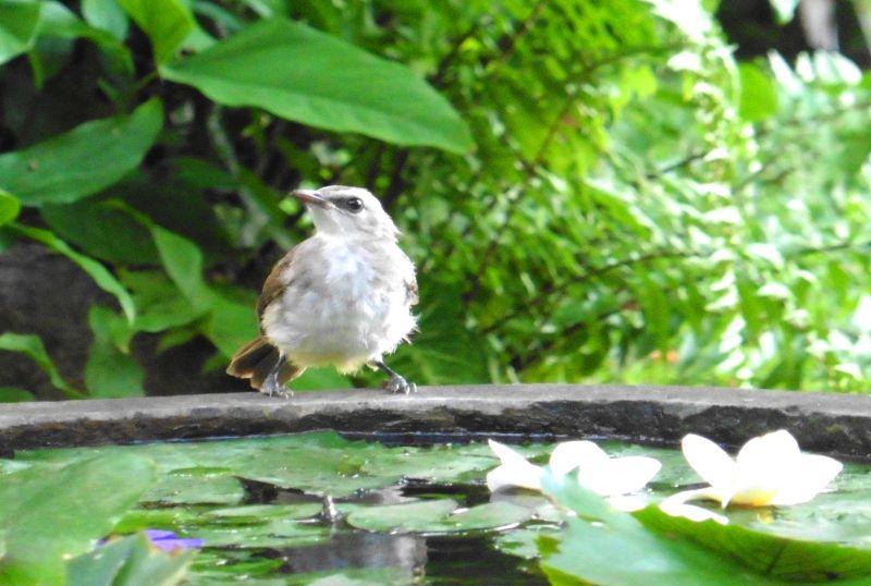 Vogelstimmen bei der Massage hören