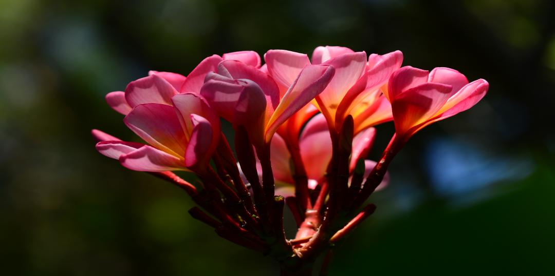 Slider Blüte